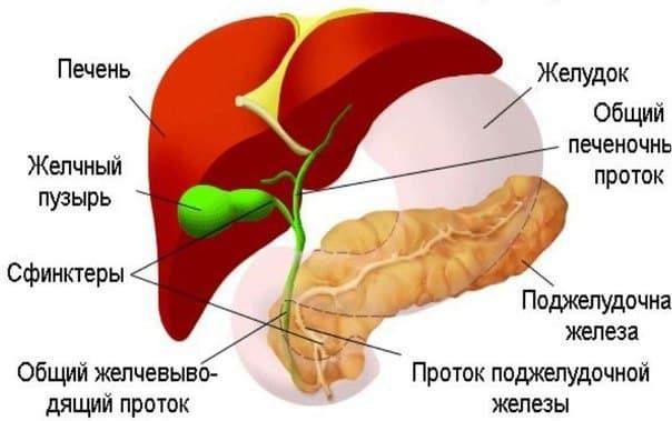 samomassazh-zhelchnogo-puzyrya