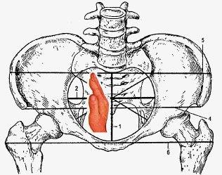 anatomicheskie-oblasti-dostupnye-dlya-massazha-vnutrennix-organov-3